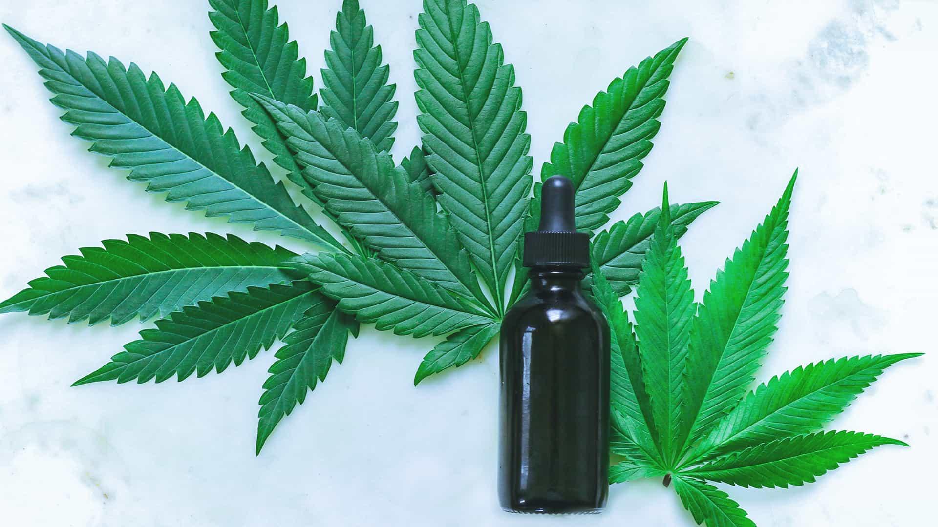 La canapa è una pianta dai mille usi che a causa di uno di essi è proibita e sottoposta alla gogna mediatica