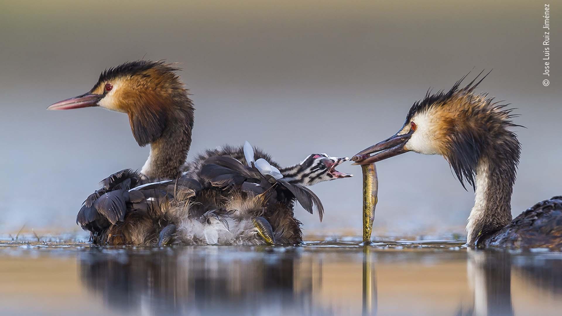© Jose Luis Ruiz Jiménez, Wildlife Photographer of the Year 2020