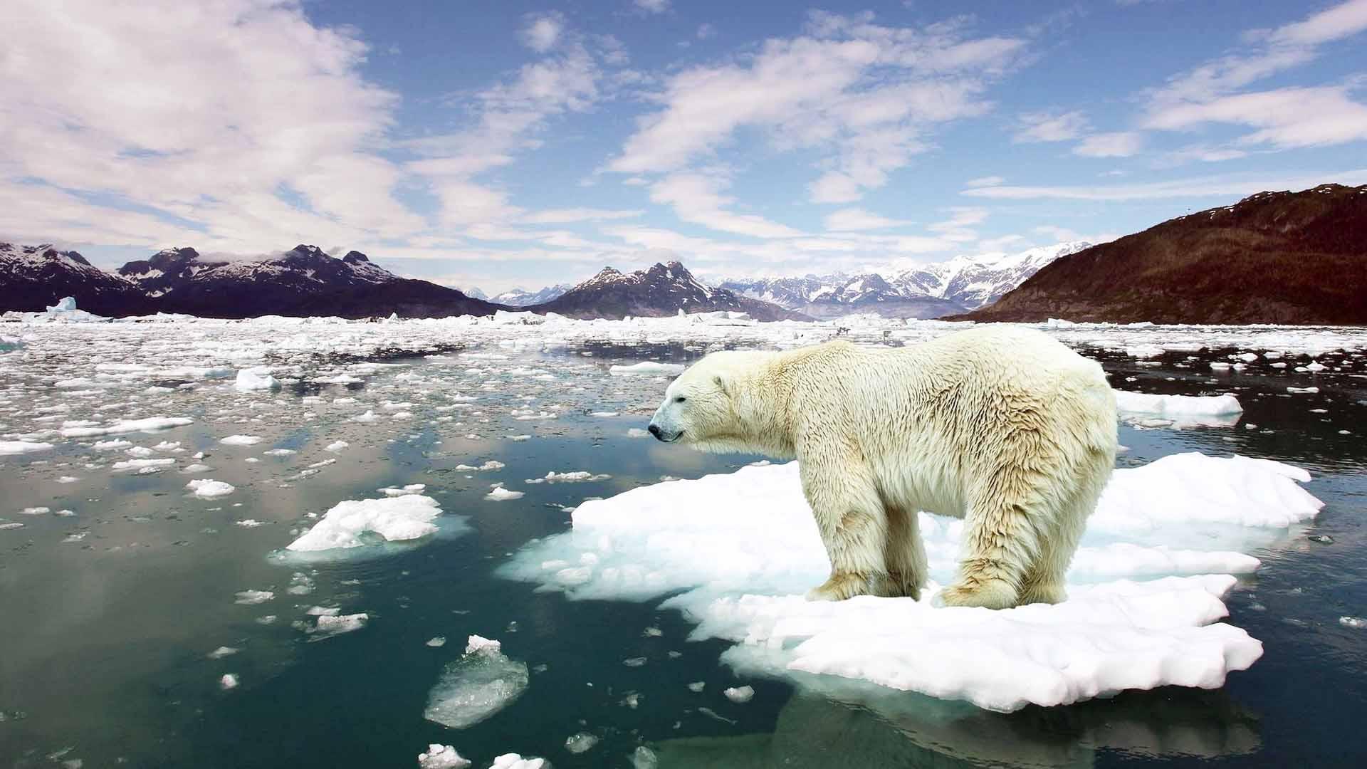 Dobbiamo proteggere gli ecosistemi dal riscaldamento globale