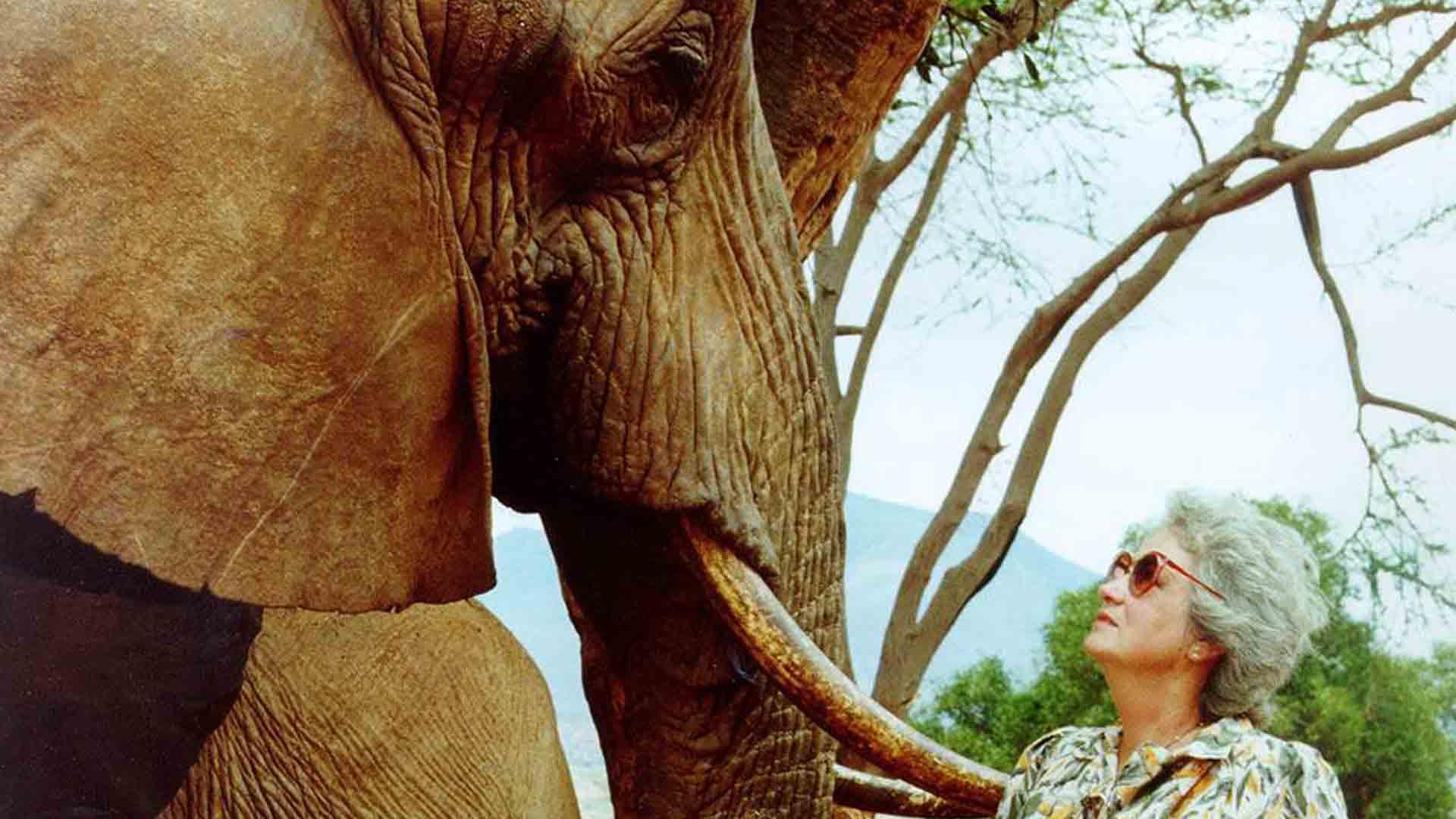 La donna che salvava gli orfani di elefante