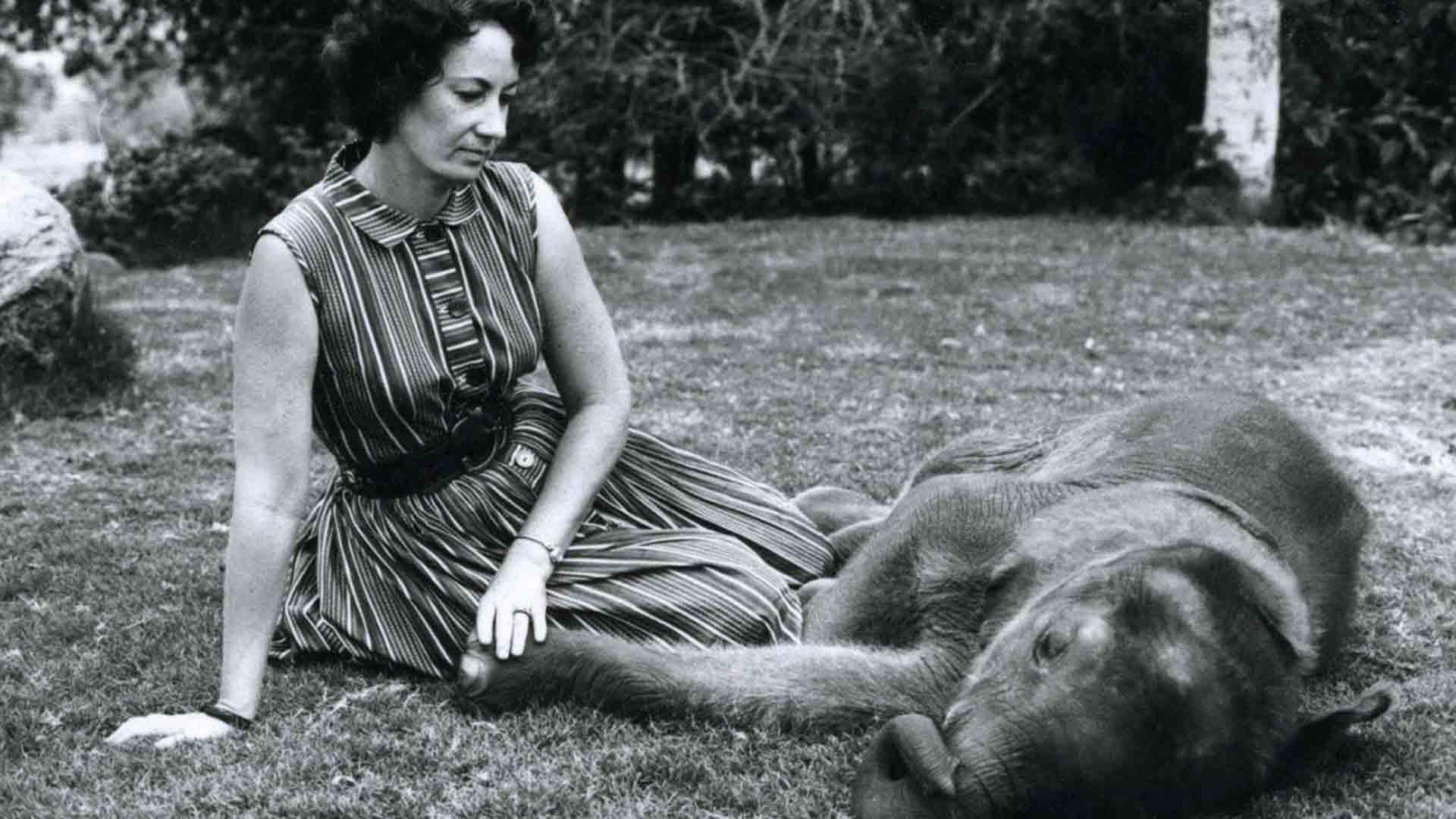 Daphne Sheldrick ha salvato centinaia di elefanti