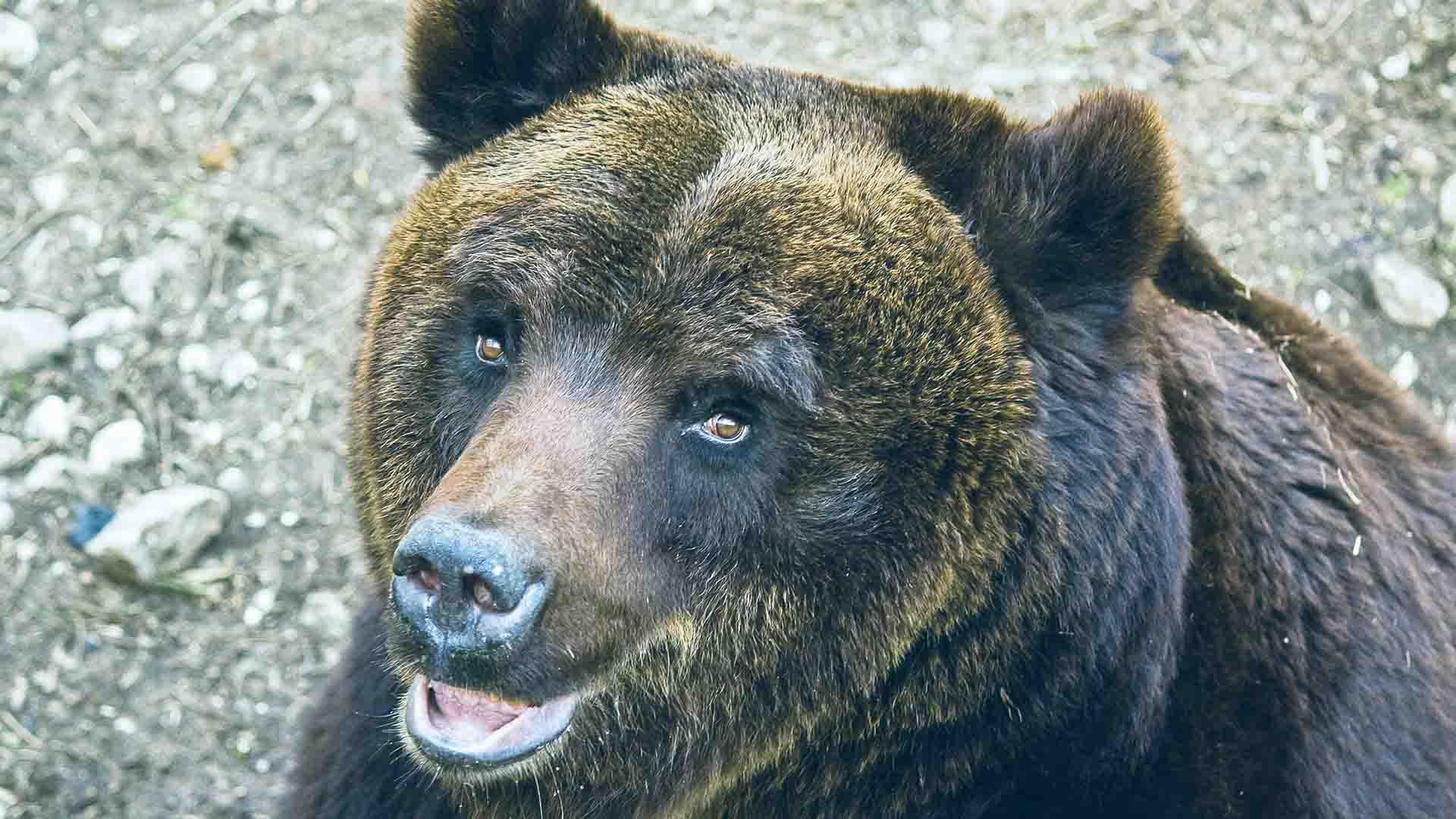 Circa il 50% delle specie animali è a rischio in varie aree del pianeta