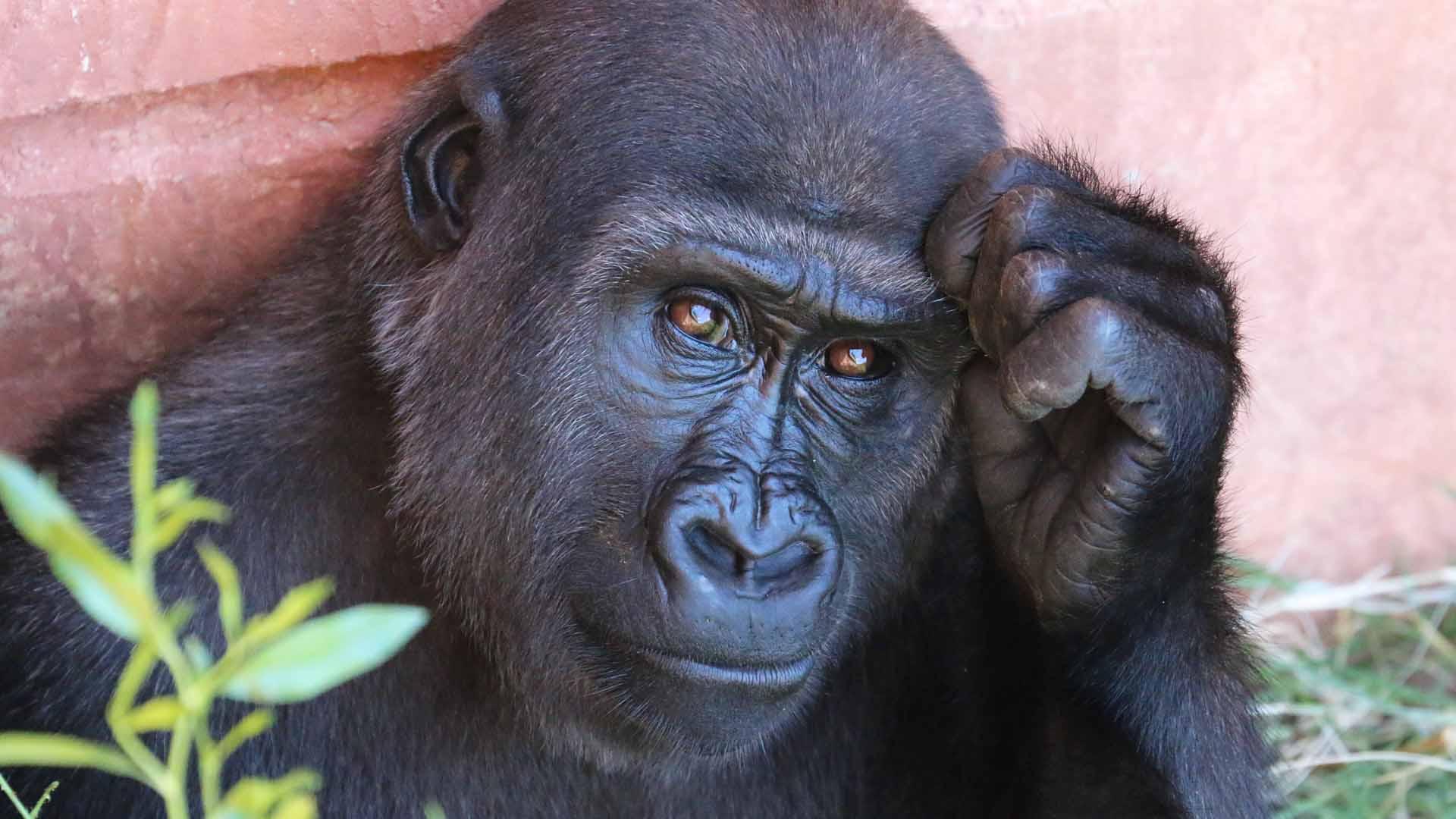 animali a rischio di estinzione