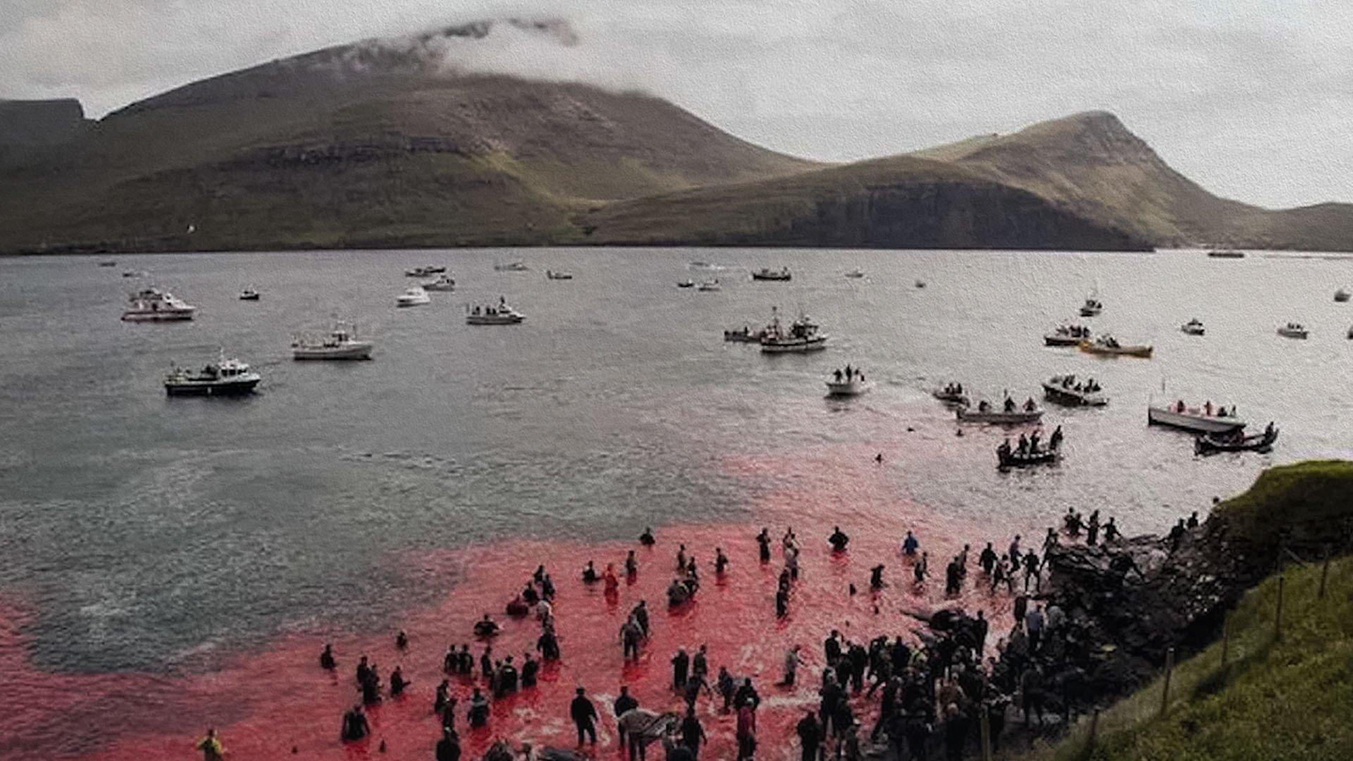 Perché continua il massacro di balene e delfini nelle Isole Far Oer