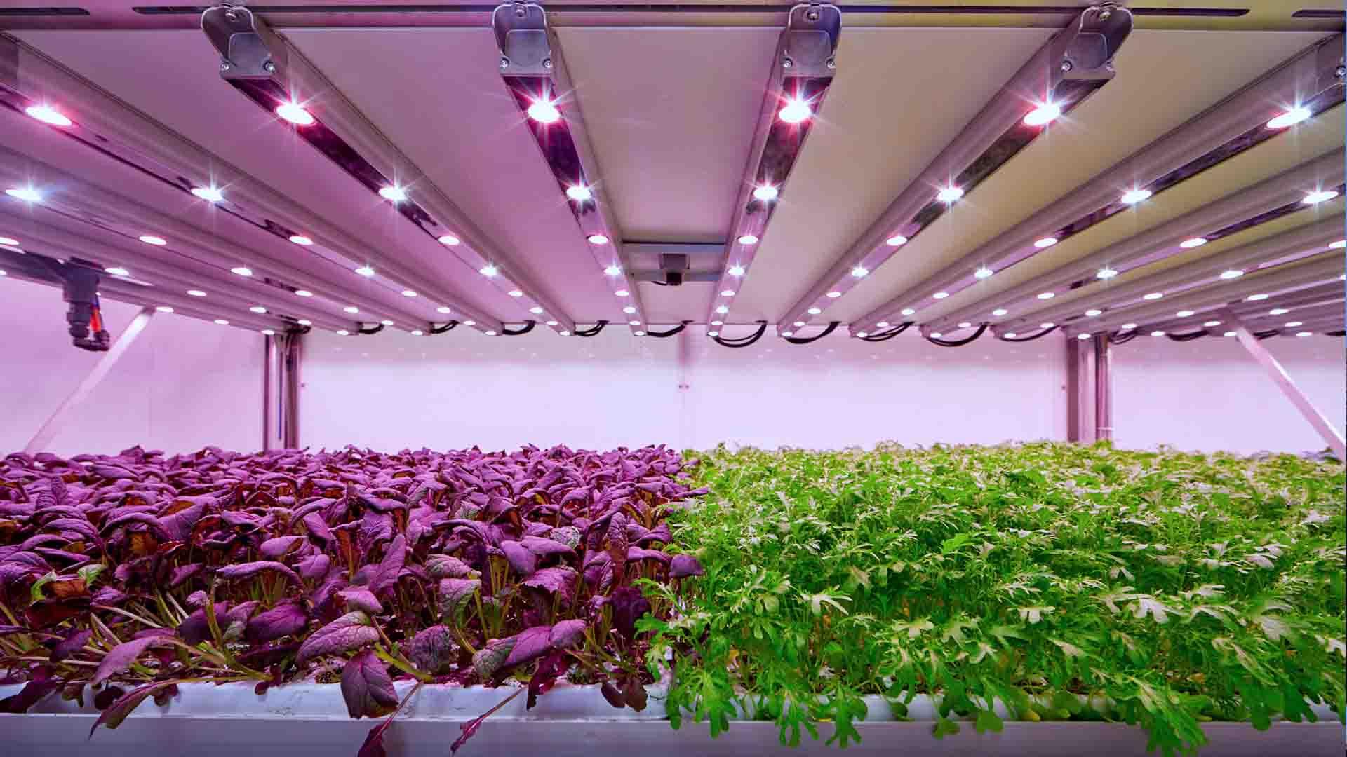 Le coltivazioni i Planet Farms