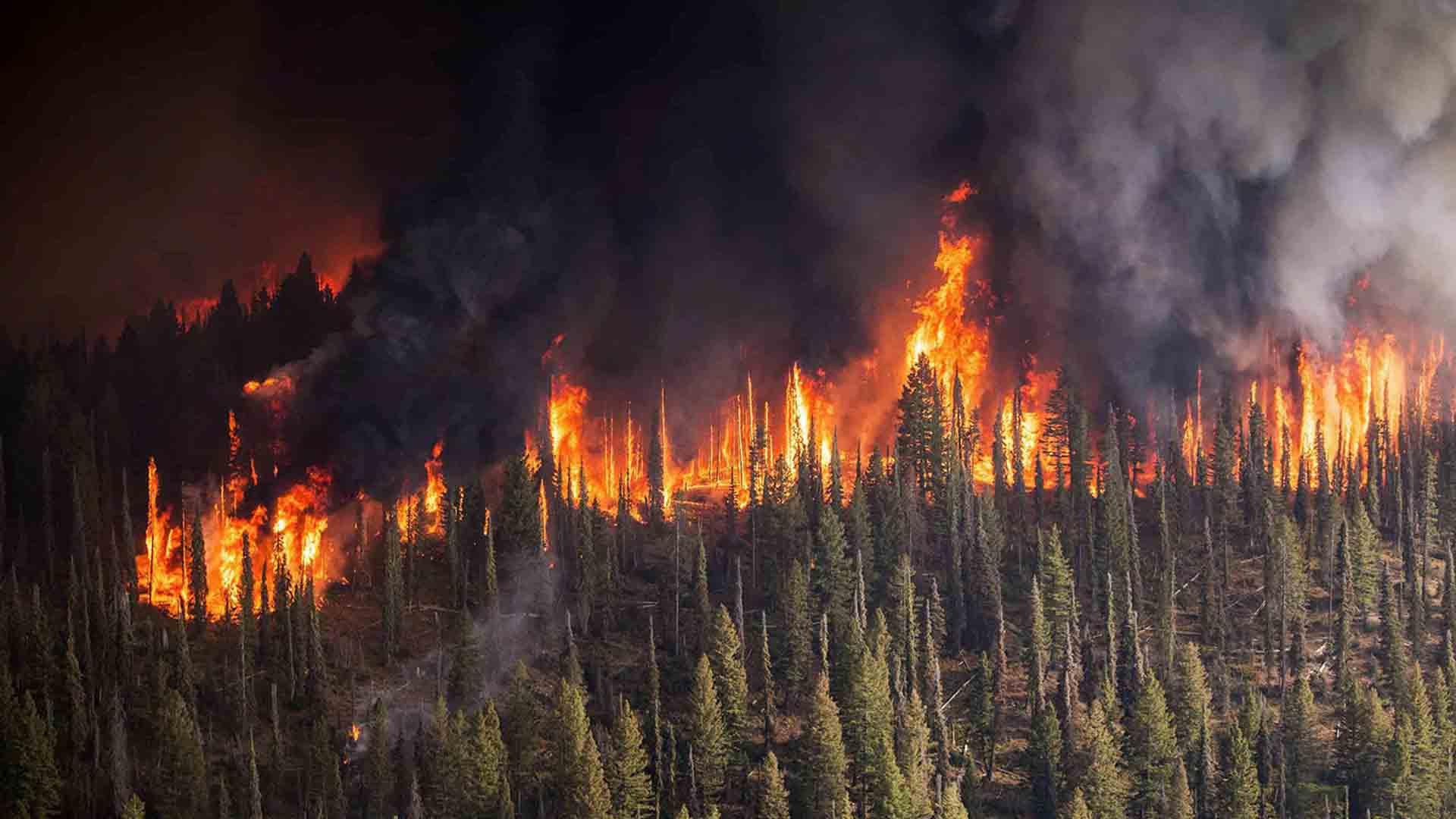 incendi siberia amazzonia australia california
