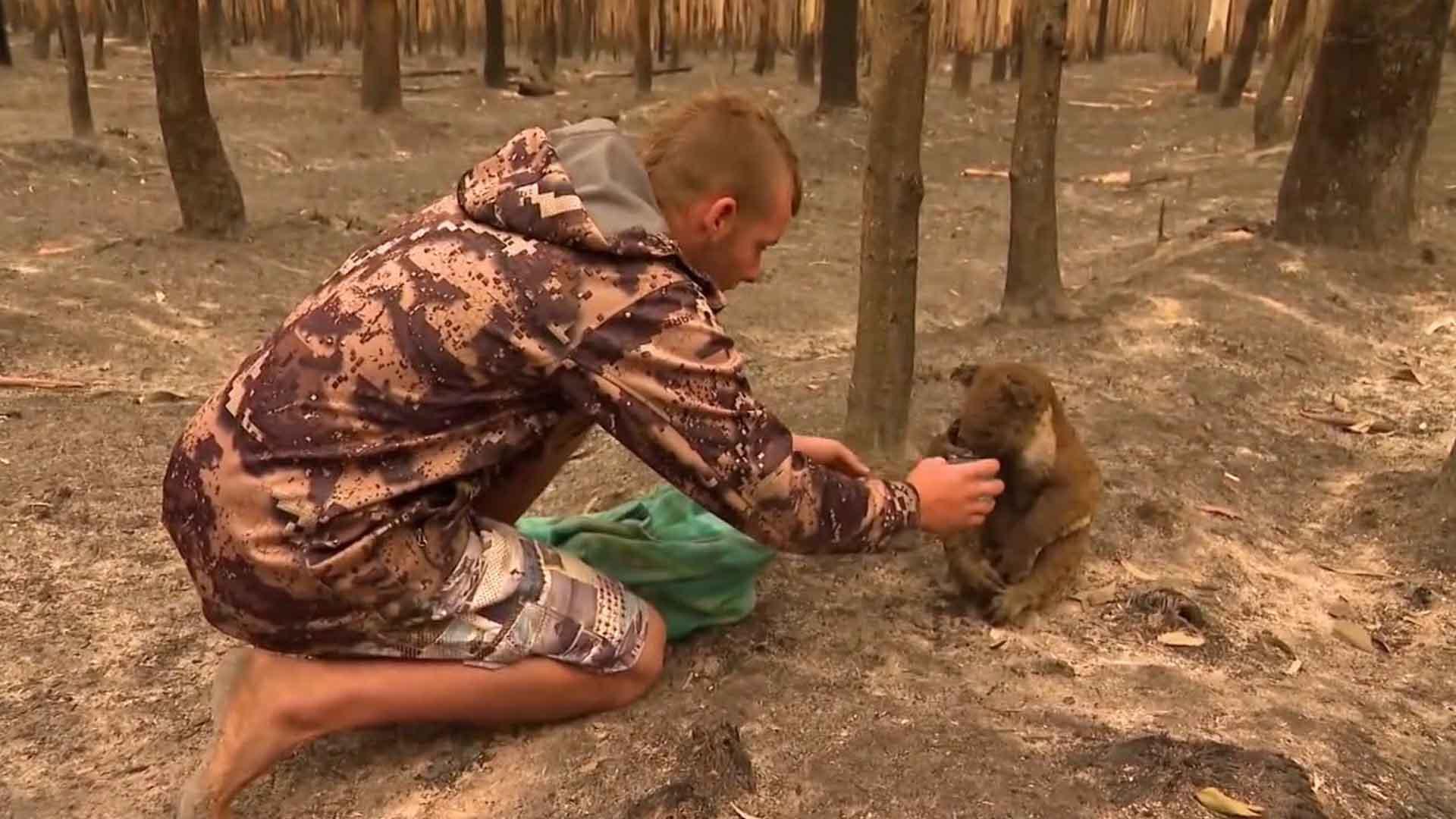 Patrick Boyle è il cacciatore che salva i koala dagli incendi
