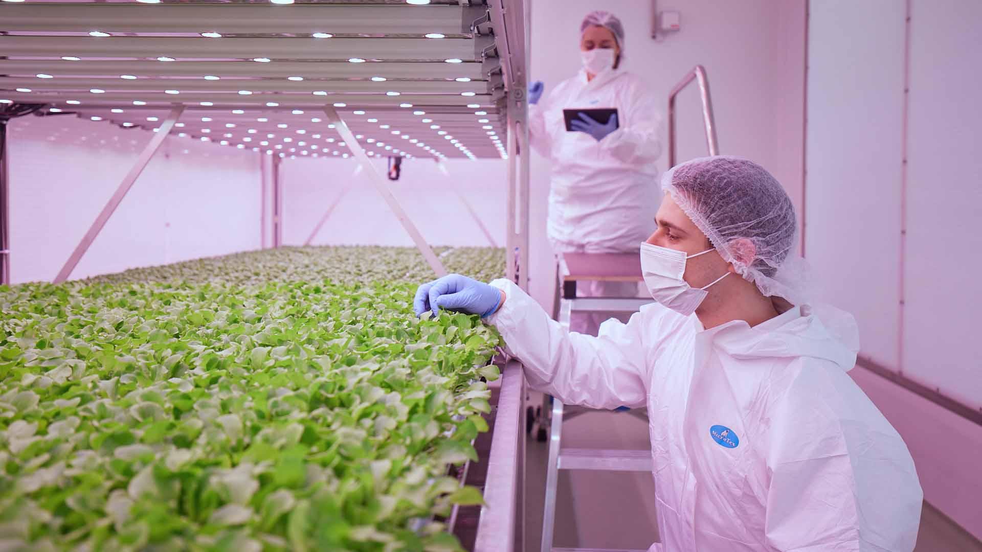Planet Farms sta rivoluzionando l