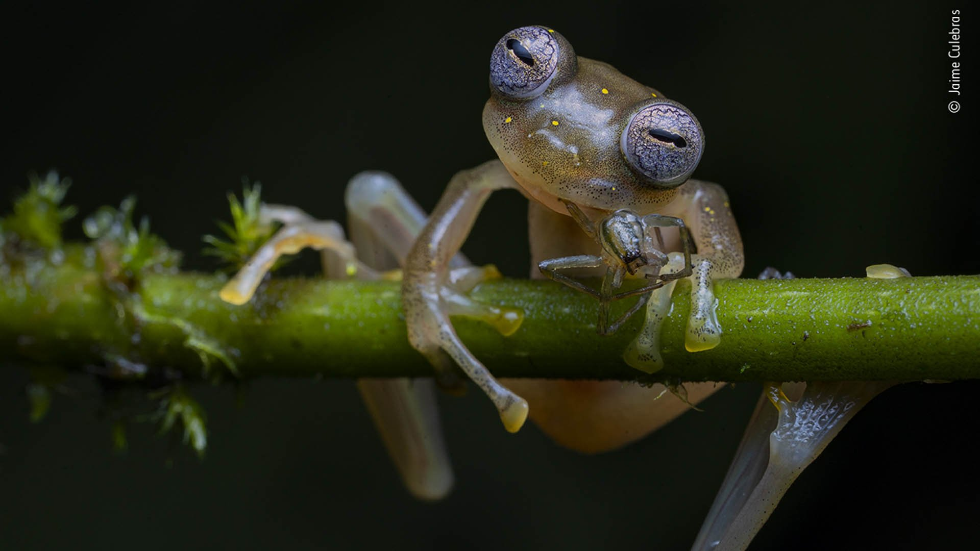 © Jaime Culebras, Wildlife Photographer of the Year 2020