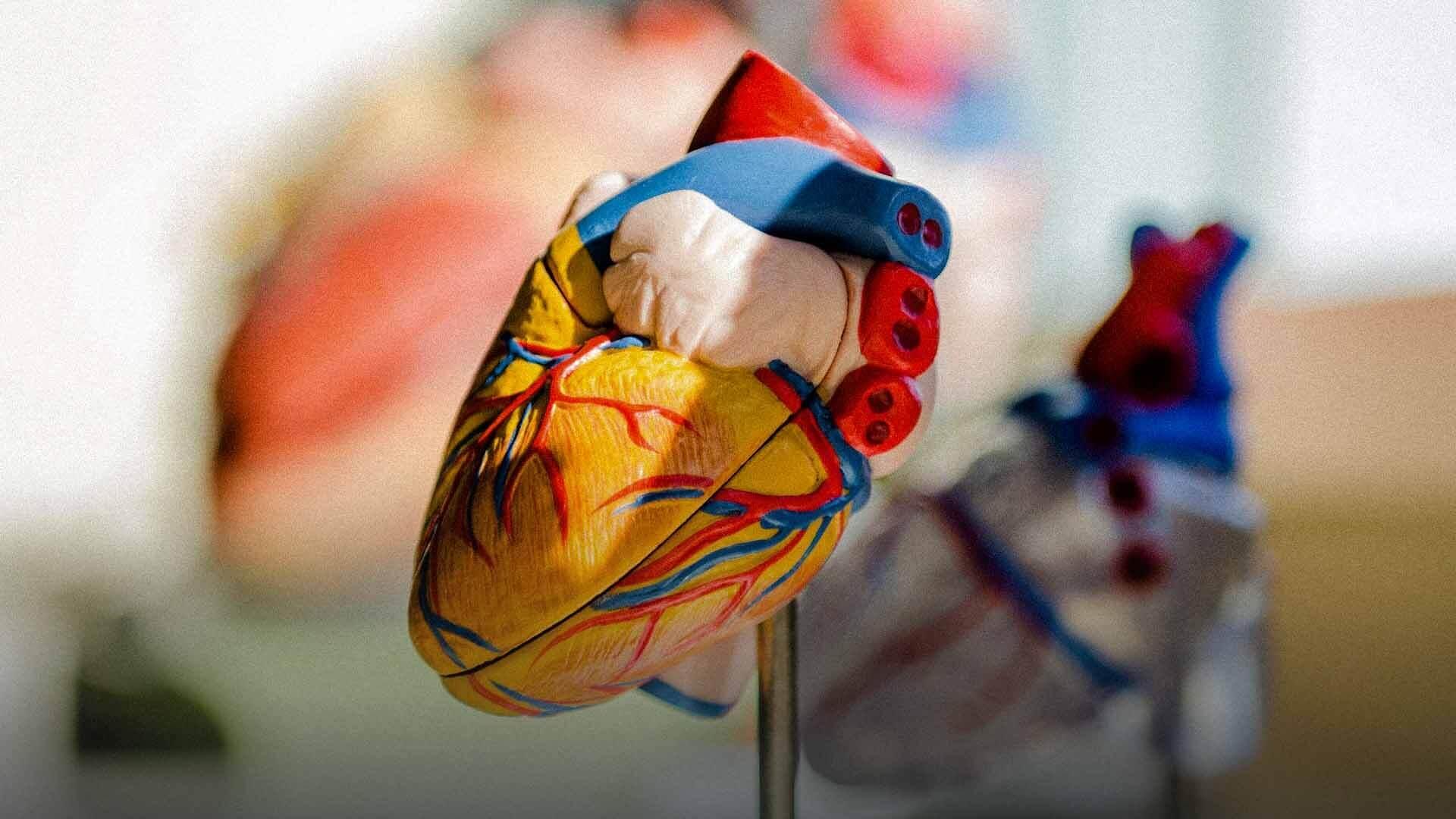 «Ti conosco da sempre»: gli incontri tra trapiantati e famiglie dei donatori